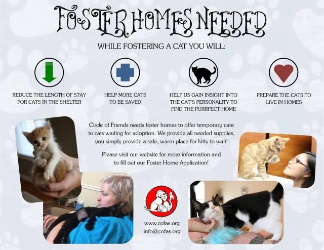 fosteringcats